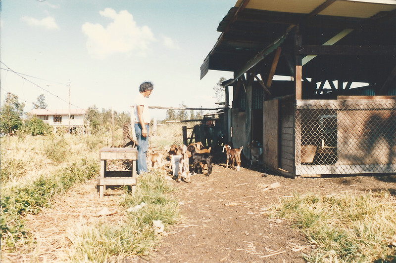 Dad with goats on his 3 acres before all the planting 1