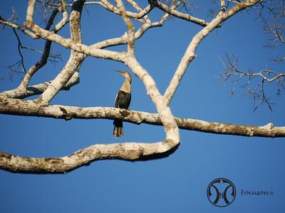 Peru - Birds