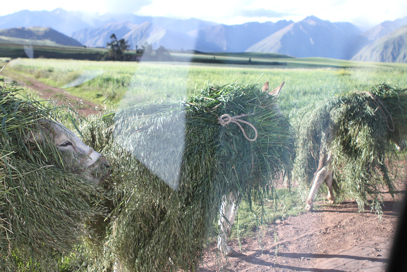 Through the window of the van....grass donkeys.
