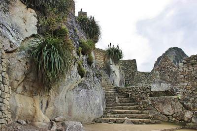 Fern Stairway