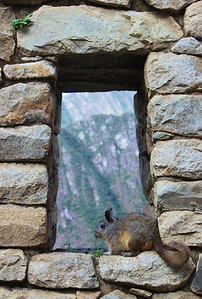 In the Window of Time