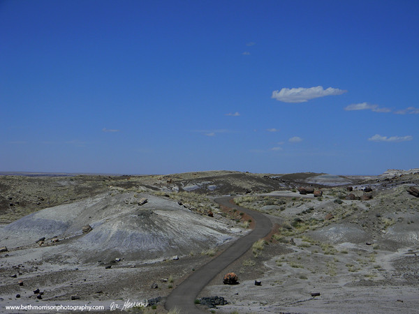 Petrified Forest National Park  and Painted Desert Arizona 5-2011