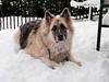 Blade at home in the snow. Copyright Peter Drury 2010