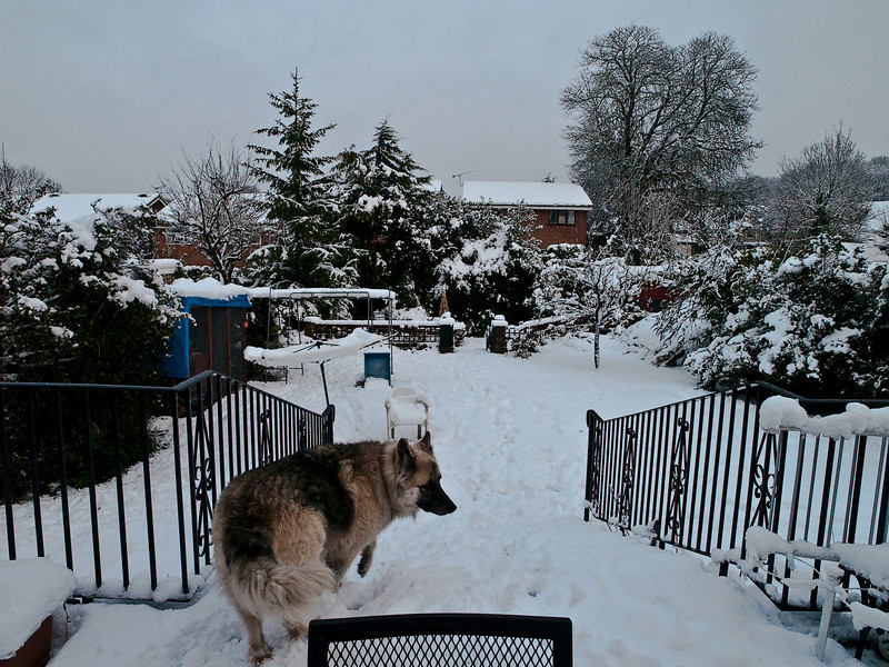 Pets at home in the snow. Copyright Peter Drury 2010