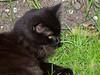 17 April 2011. A little friend I met at Arundel.  Copyright Peter Drury 2011