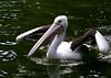 Bird 7