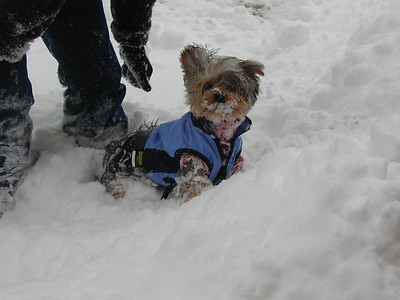 2004 Whoozie In the Snow