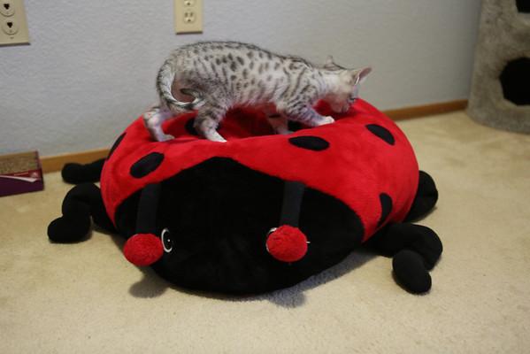 Kitten, first week