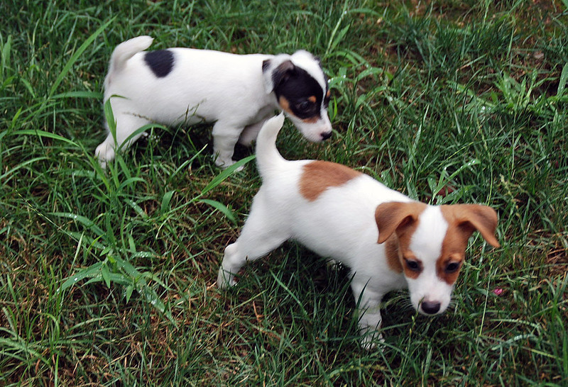 Ziti & Penne explore their yard.