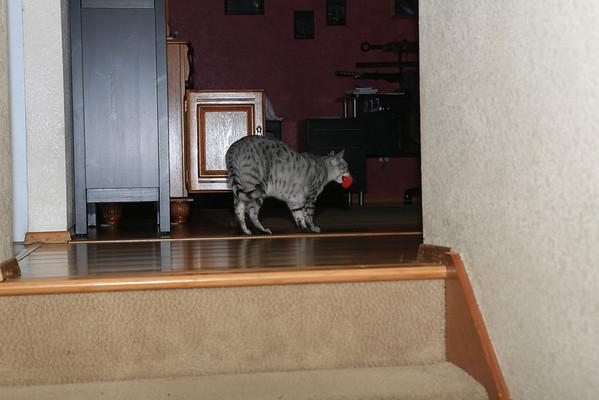 Airplane and Baldur Box Cat 2013