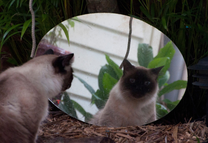 Who's the cat in the mirror?