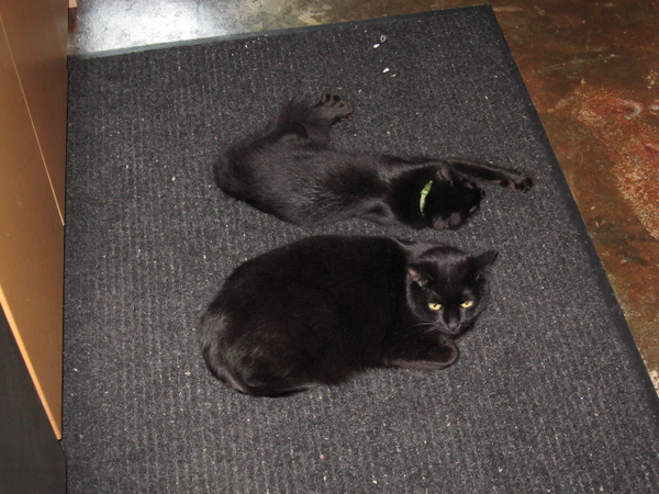 Nero and Mephisto in the kitchen.