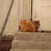 farm cats at the Hokah farm