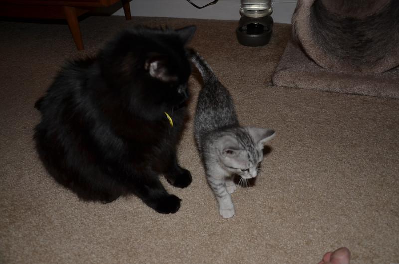 Tamaru and Nero