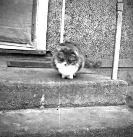 July 1962 - Annie Kitty