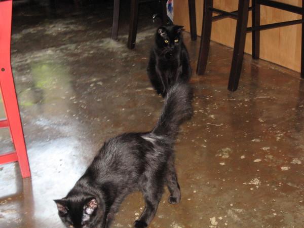 Nero and Mephisto.
