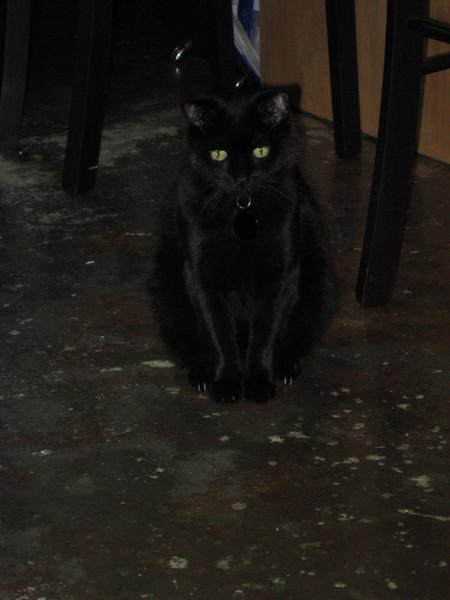 Mephisto.