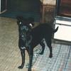 Irene and Leslie's dog, Nutchi