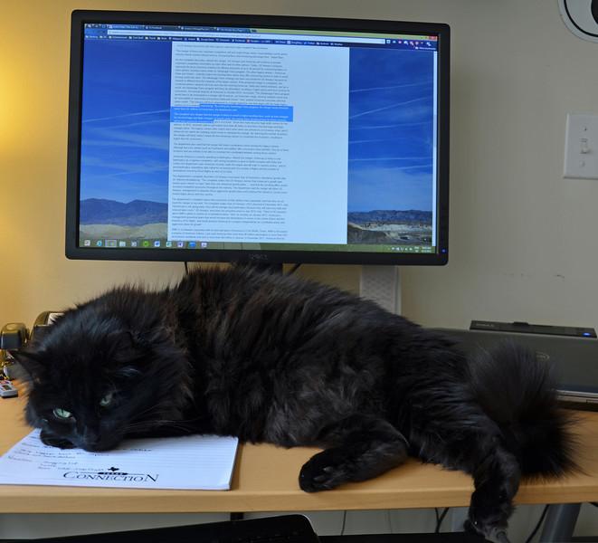 Begemot helping me work.