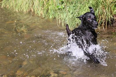 Shea Dog at Clear Creek