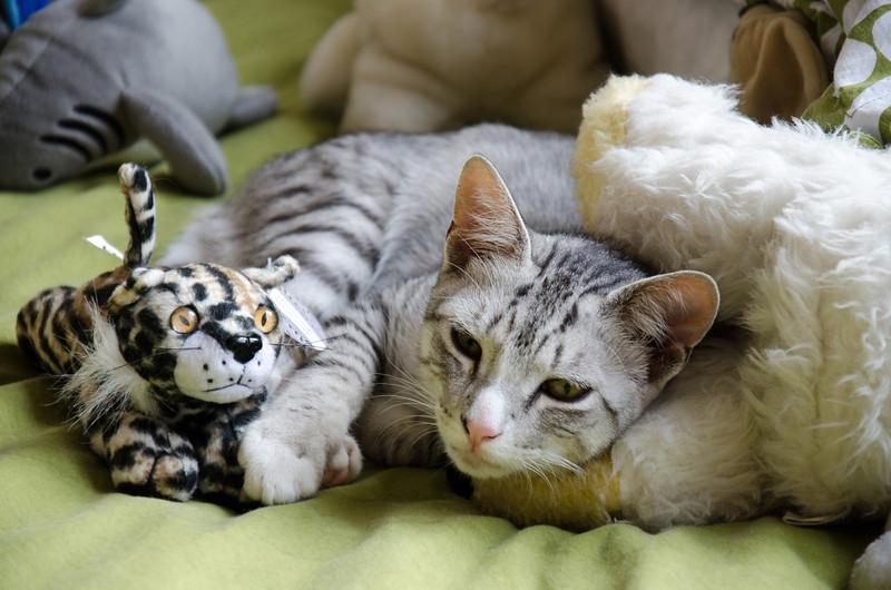 Sleepy Tamaru