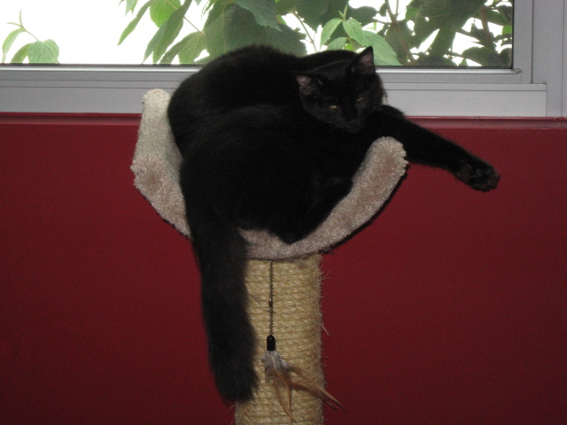 Nero and Mephisto on top of the cat tower.