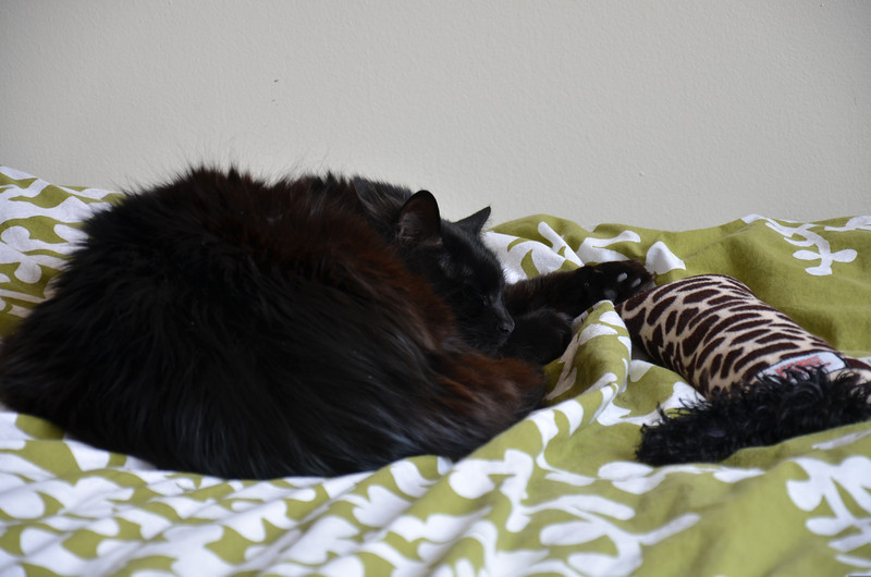 Nero sleeping