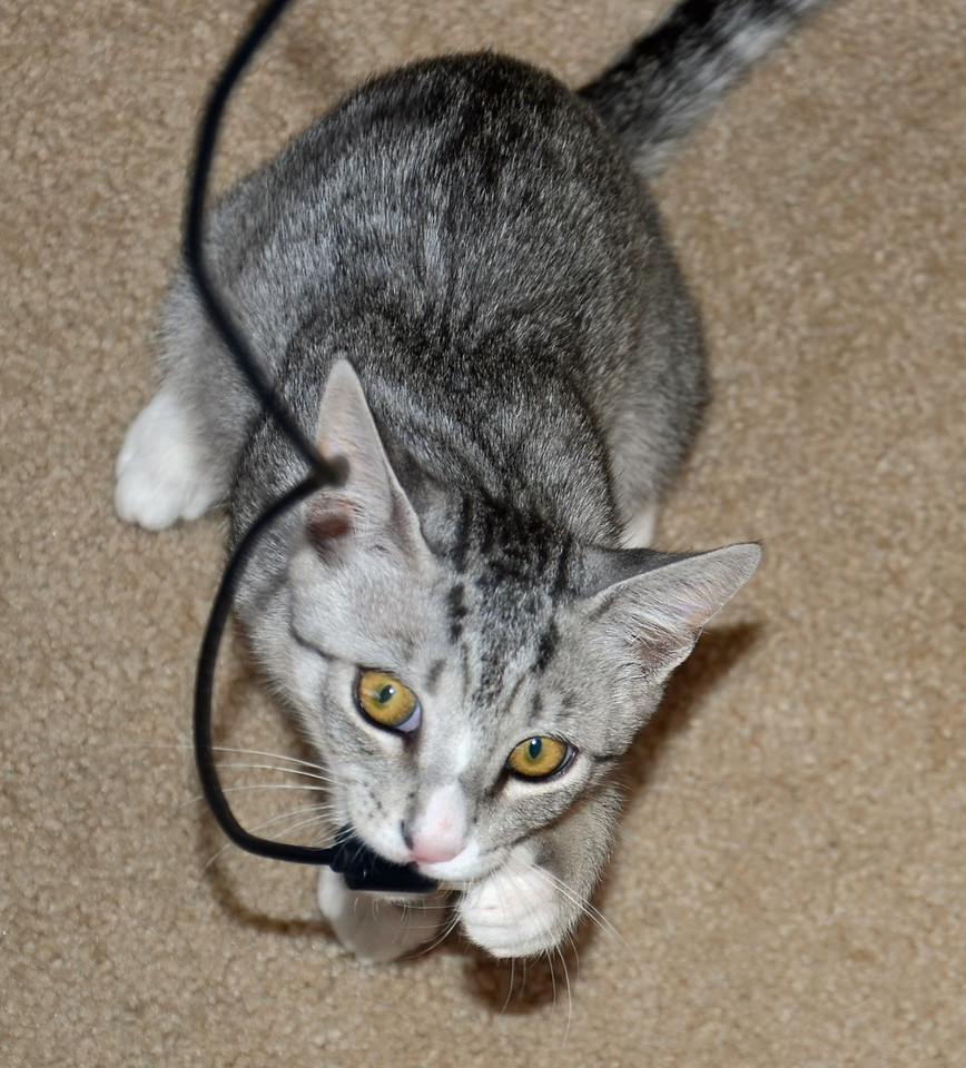Tamaru versus the USB cable