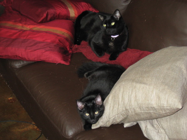 Nero and Mephisto on the sofa.