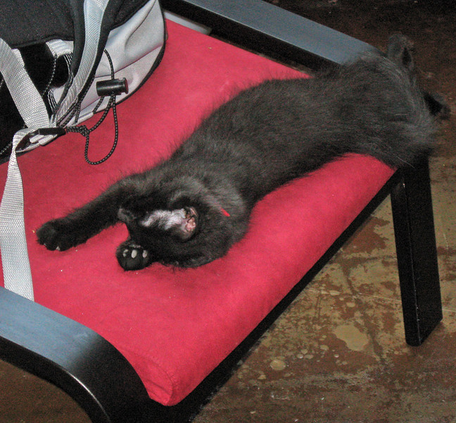 Nero asleep on the red chair.