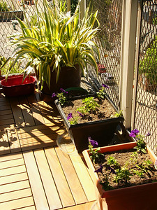 Plantings on deck