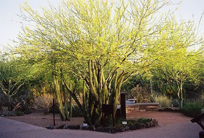 5/18/00 Phoenix Desert Botanical Garden