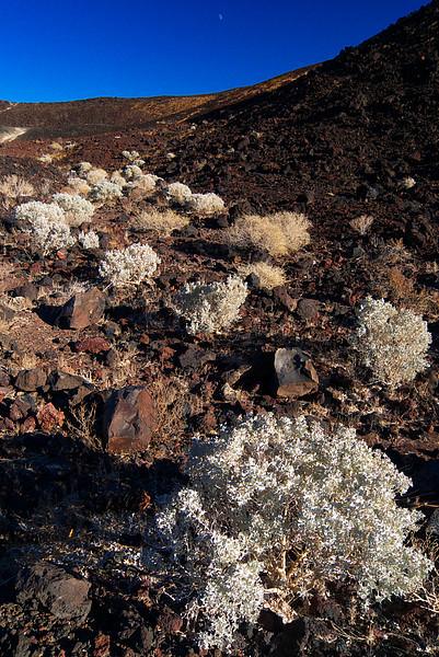 11/7/08-Amboy Crater