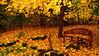 11/15/08-Golden Rain