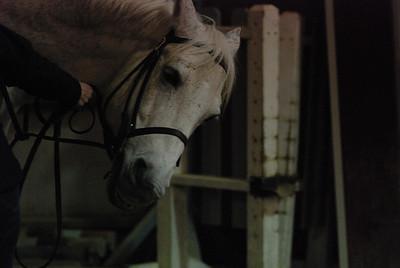 Photo class ( Horses) 034