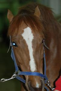 Photo class ( Horses) 005