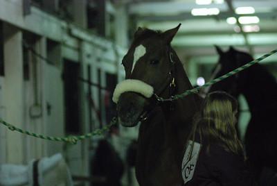 Photo class ( Horses) 015