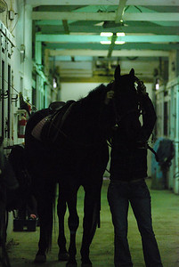 Photo class ( Horses) 016