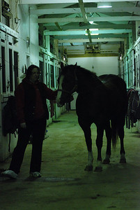 Photo class ( Horses) 030