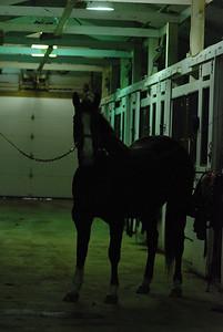 Photo class ( Horses) 022