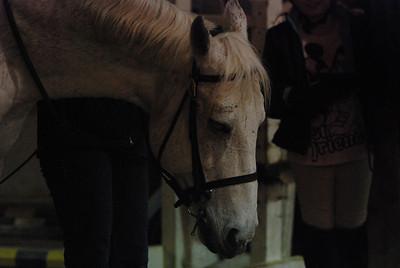 Photo class ( Horses) 036