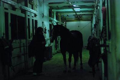 Photo class ( Horses) 028