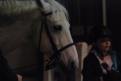 Photo class ( Horses) 035