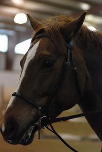 Photo class ( Horses) 042