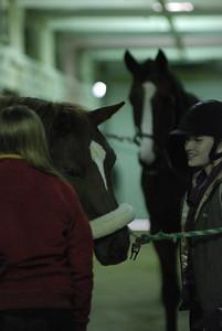 Photo class ( Horses) 013