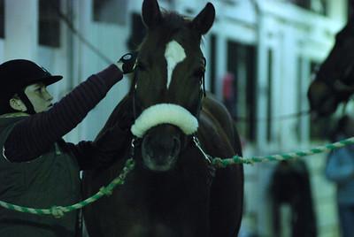 Photo class ( Horses) 012