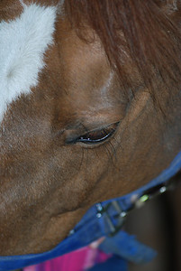 Photo class ( Horses) 002