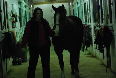 Photo class ( Horses) 031