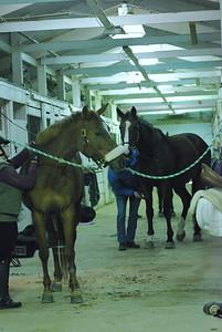Photo class ( Horses) 011