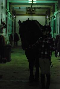 Photo class ( Horses) 019